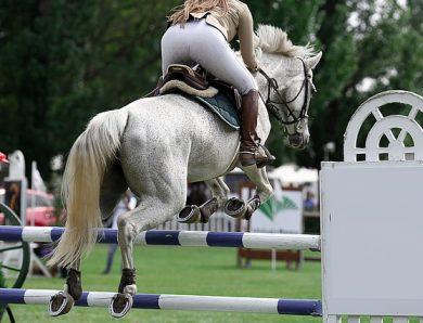 Quelles sont les disciplines équestres